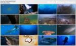 ¶wiat zabójczych rekinów / World's Deadliest Sharks (2010) PL.TVRip.x264 / Lektor PL